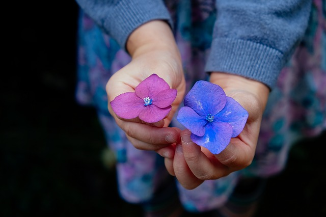 Fleurs-CC0 Pixabay